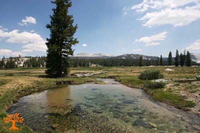 sp-tuolumne-meadow