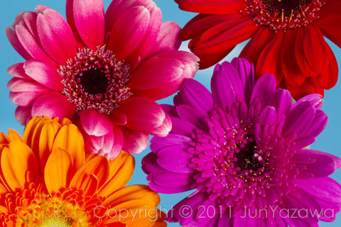 postcard2011_flowers01