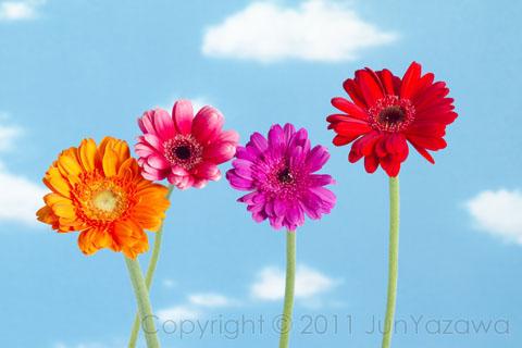 postcard2011_flowers02
