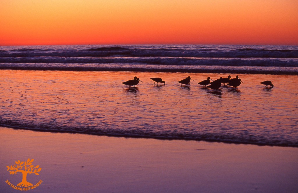 birds,silent summer