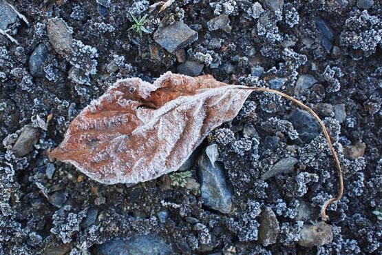 srblog20120109g